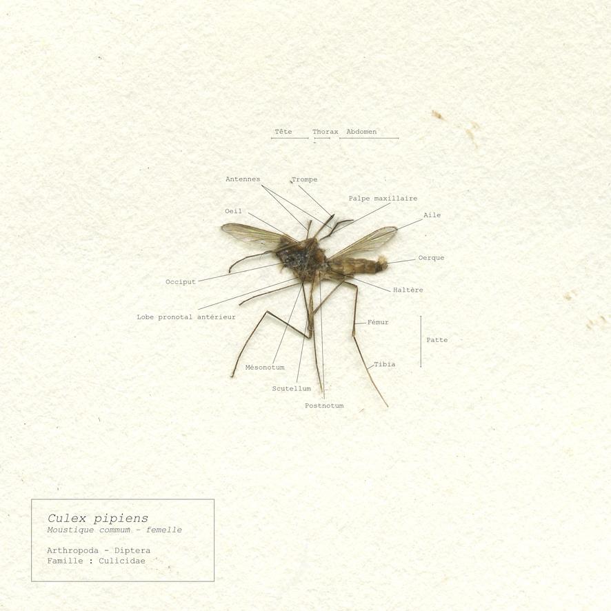 planche anatomique2min.jpg