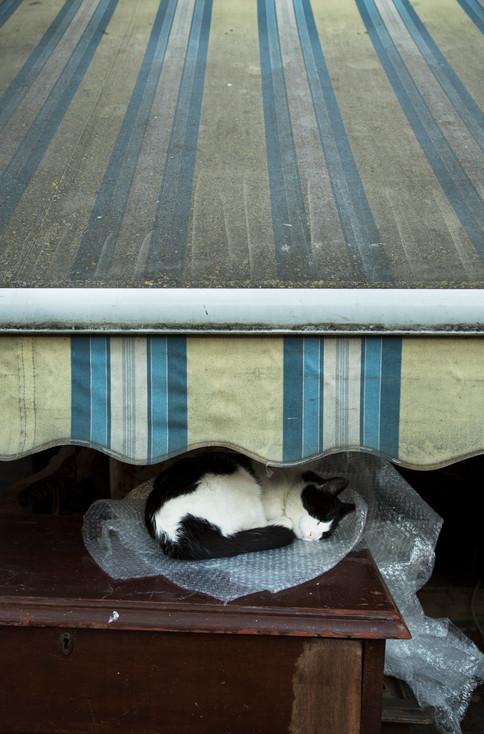 Kitty nap on bubble wrap, Prince Island,