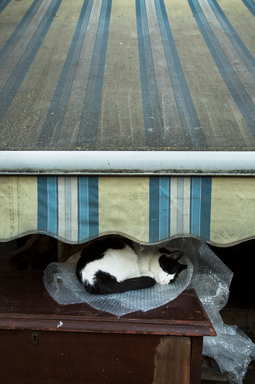 kitty nap on bubble wrap