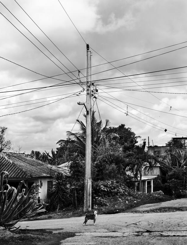 Lonely street dog, Banes, Cuba, 2015