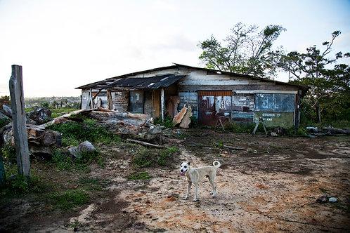 Abandonned barn and dog, Sao Cristovao