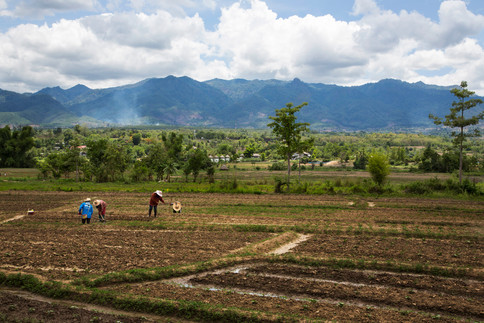 Field of Pai, Thailand, 2015