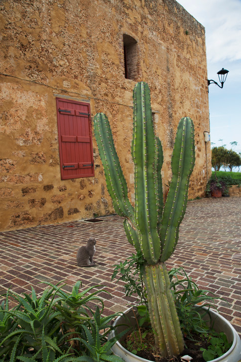 The cactus and a cat, Chania, Crete, 2017