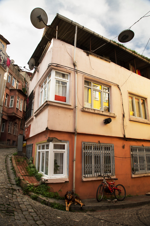 Dog matching building,  Balat, Istanbul, Turkey, 2017