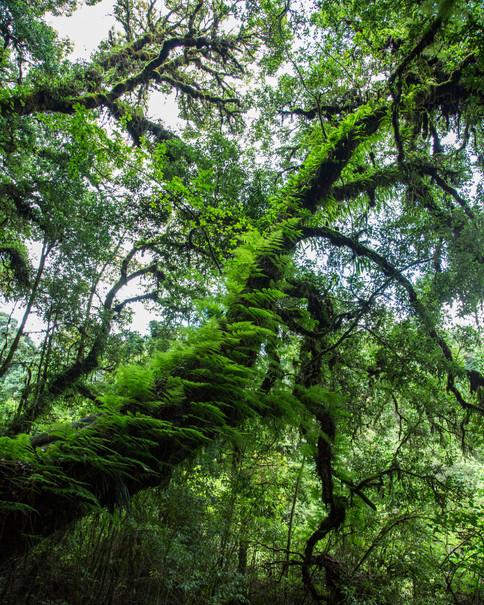 Doi Ithanon green forest, Thailand, 2015