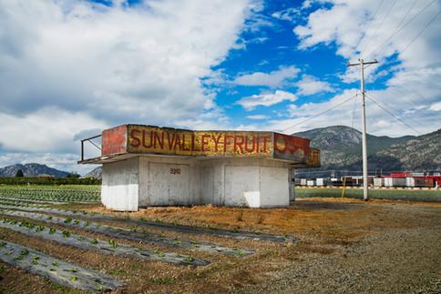 Sunvalley fruit, Osoyoos, BC, Canada, 2016