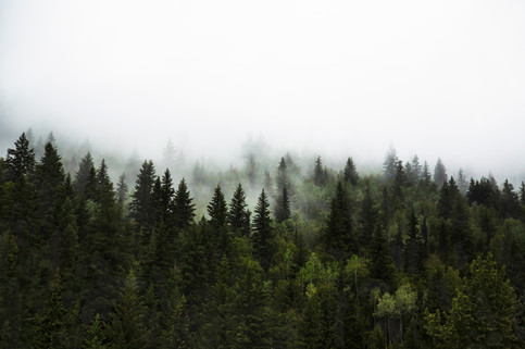 Mystic view on the forest, 99 sea to sky road, BC, Canada, 2016