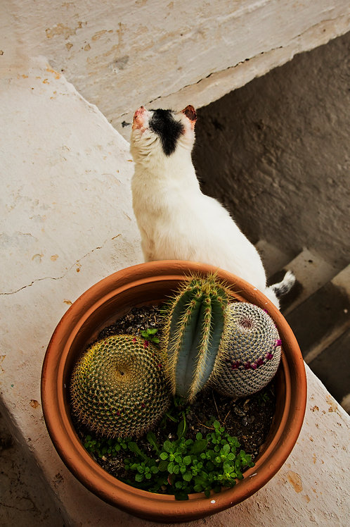 The cat and the cactus