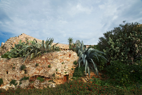 Plant a wall, Chania, Crete, 2017