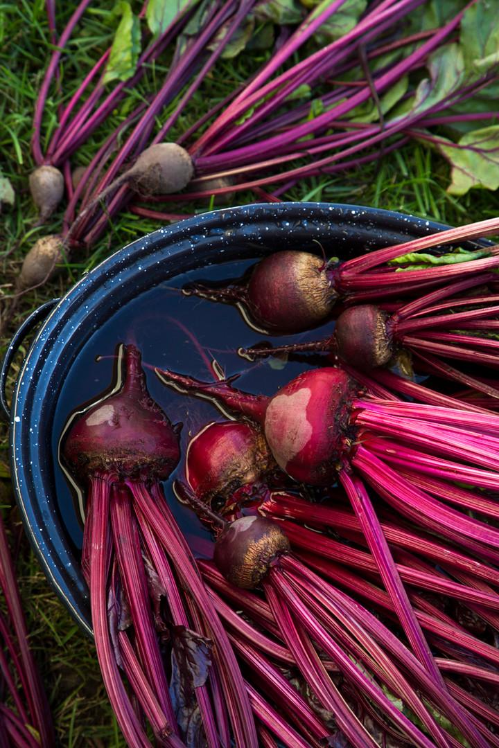 Vegan and organic harvest