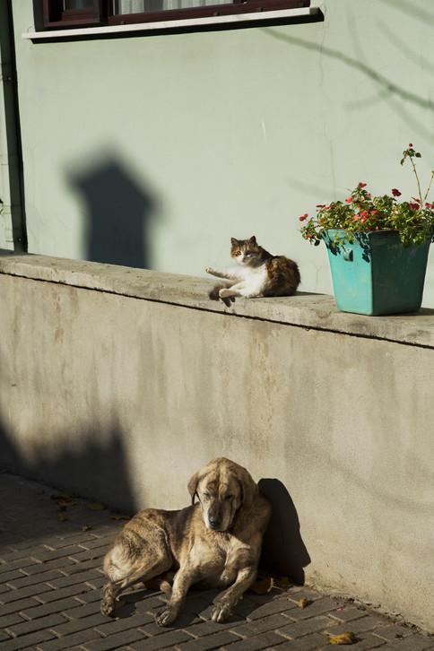 Street life shadow, Istanbul, Turkey