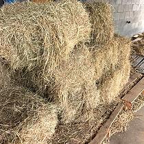 hayStraw.jpg