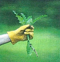 weeding.jpg