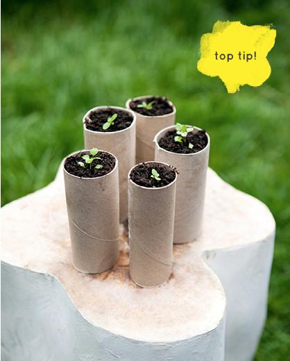 growing-saplings2