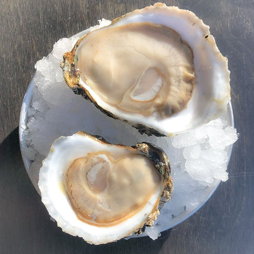 Oysters (catering menu)
