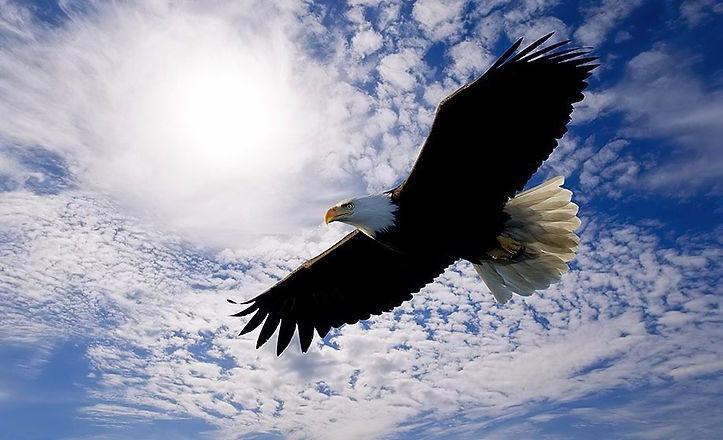 Soaring-Eagle-1.jpg