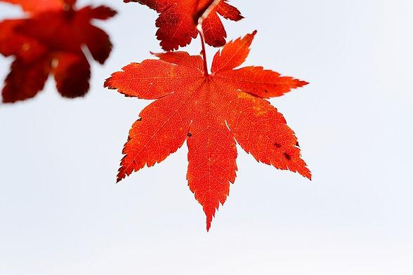 autumn-leaves-5715140_1280.jpg