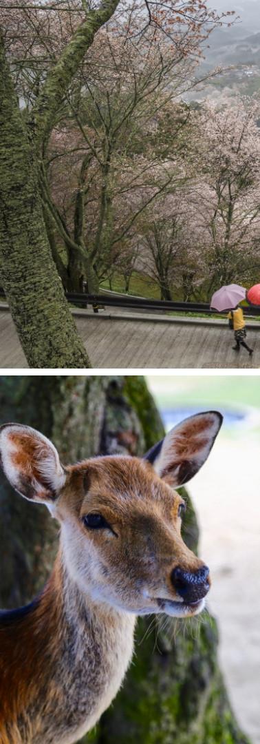 The Actual Nara