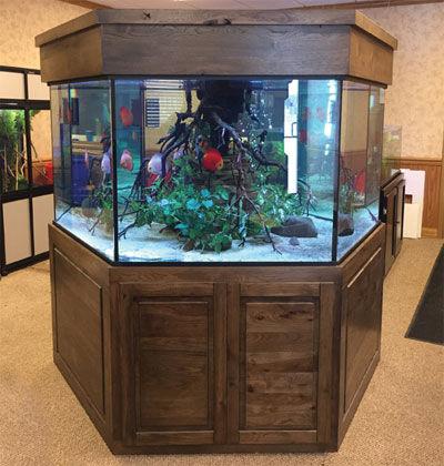 hexagon-fish-aquarium.jpg