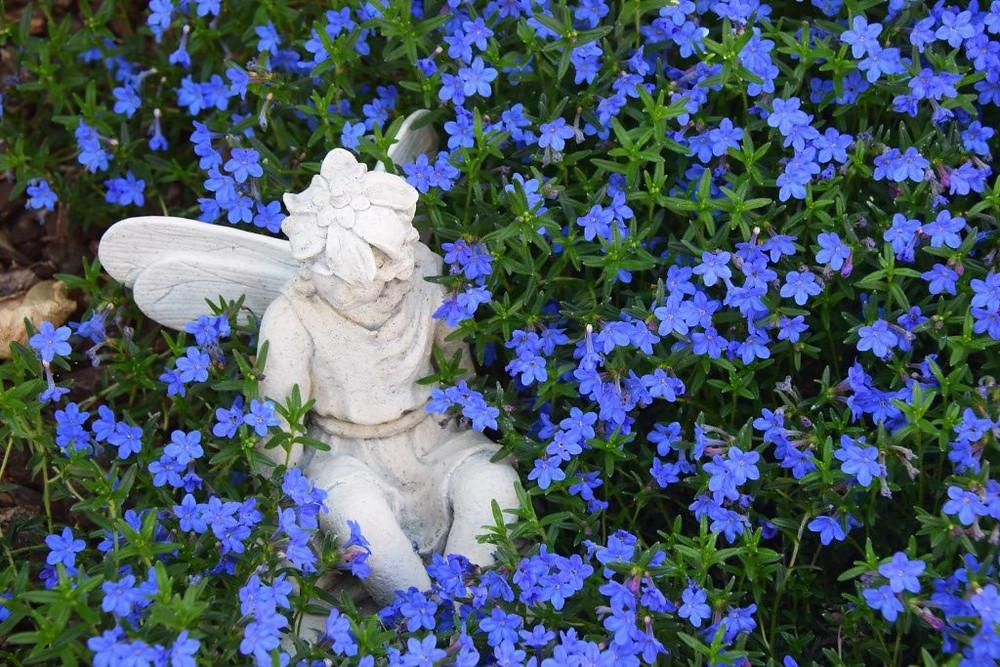 Mary's Garden Photo by Mary Morgan