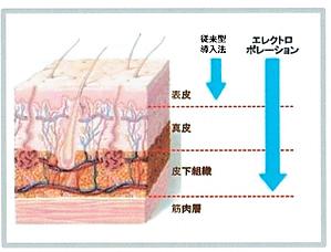 皮膚.png