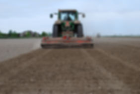 Levelling the soil to prepare for planting