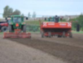 Planting organic potatoes.