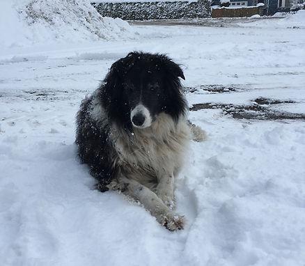 Dixie Snow Pic.JPG