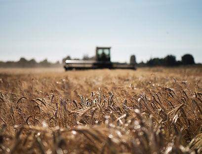 Organic Barley crop rotation.