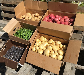 different varieties, potatoes green beans on a pallet.