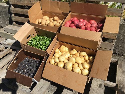 Various organic produce
