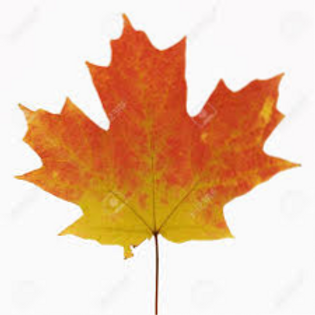 maple%20leaf_edited.png
