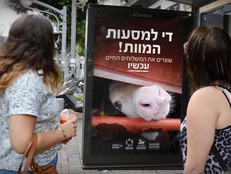 AnimalsAustralië heeft zich verenigd met dierenbeschermingsgroepen in Israël/Animals Australia has