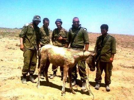 Pegasus - het paarden en ezel asiel in Israel