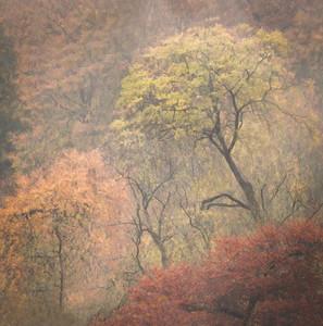 Rain on Trees.jpg