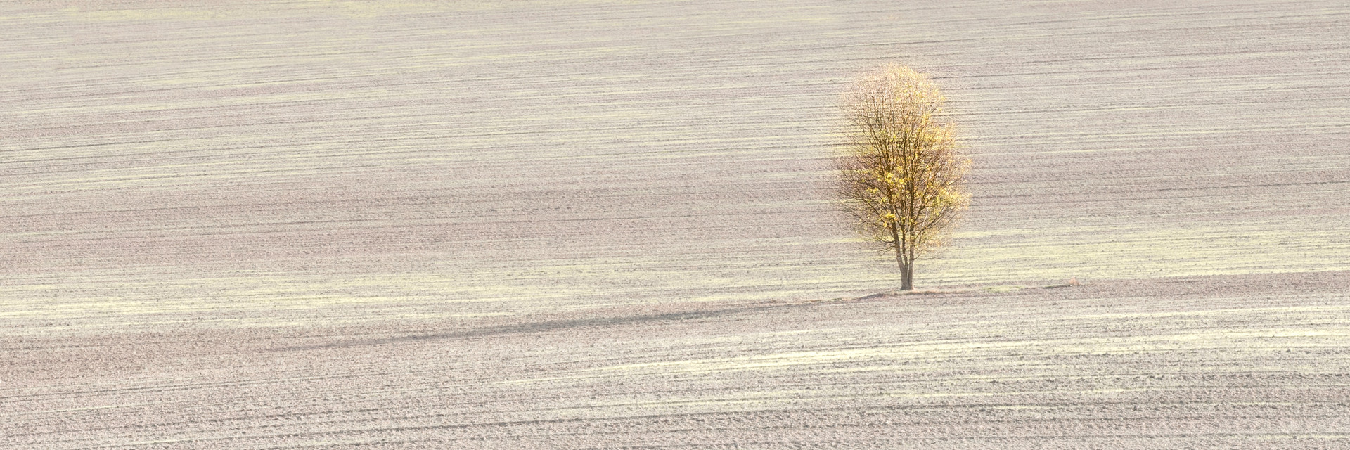 Lone Tree in Autumn