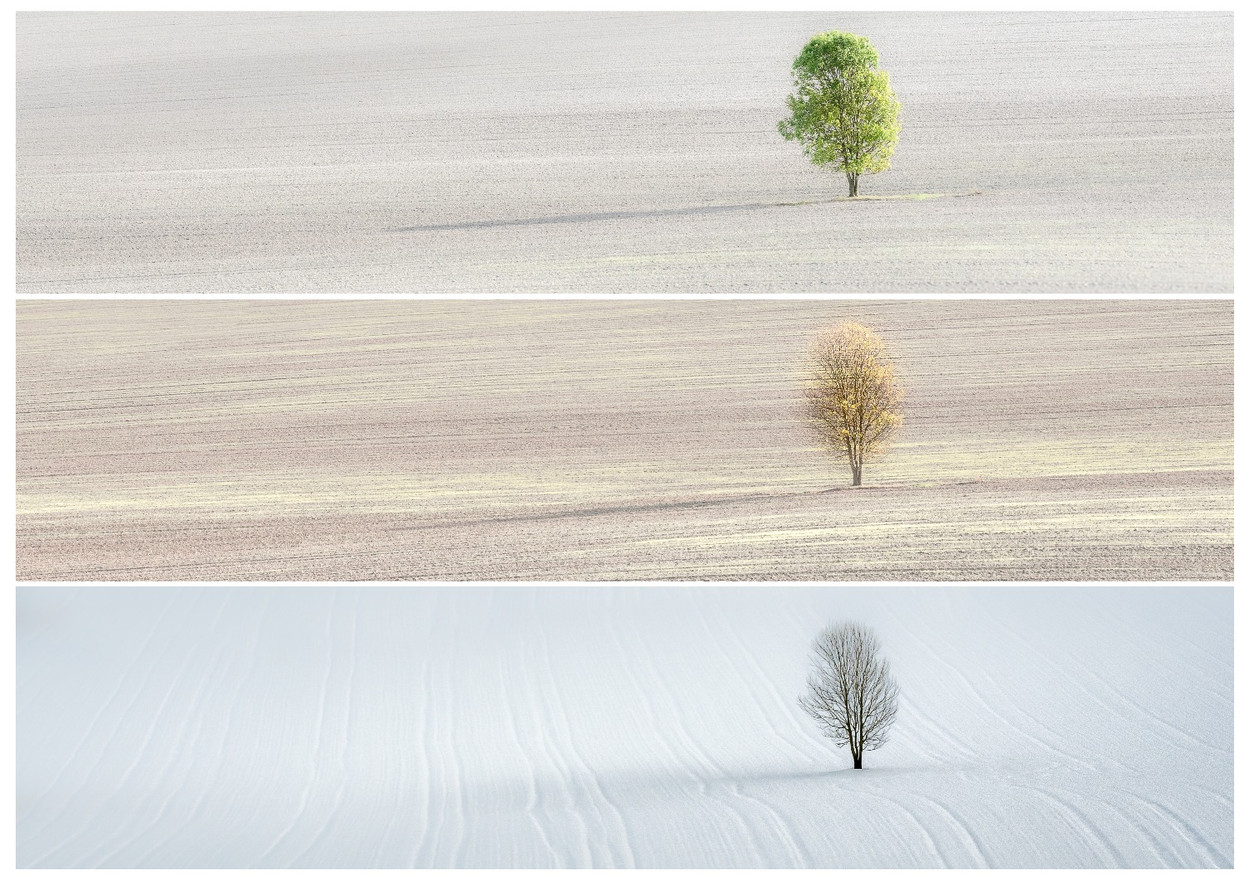 Lone Tree in 3 Seasons