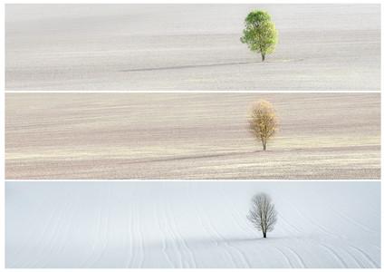 Lone Teee in 3 Seasons_edited.jpg