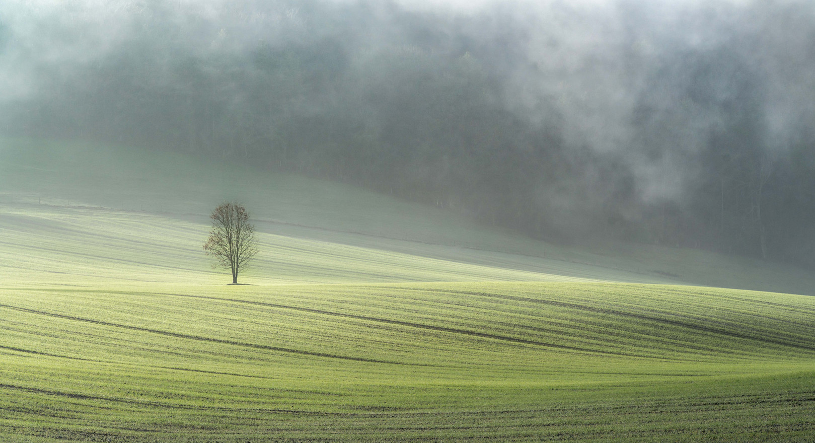 Lone Tree in Morning Mist
