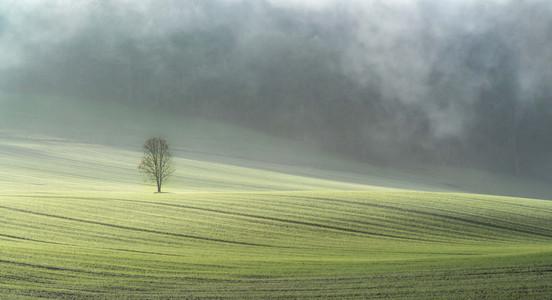 Lone Tree in Morning Mist