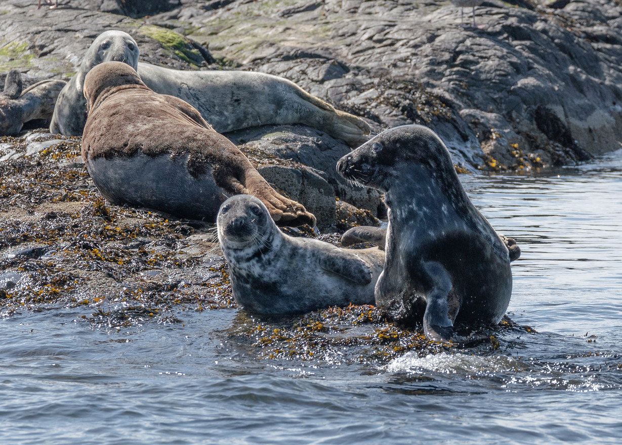 Seals in Discussion