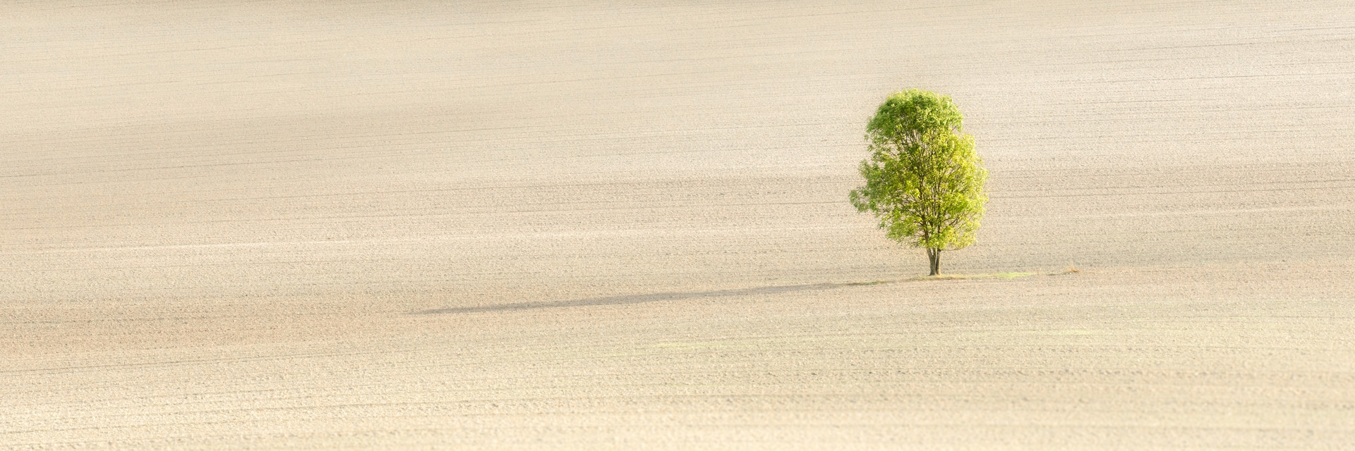 Lone Tree in Summer