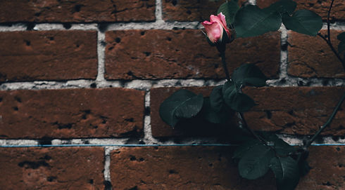 rose_edited_edited.jpg