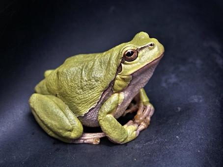 Želim li biti skuhana žaba?