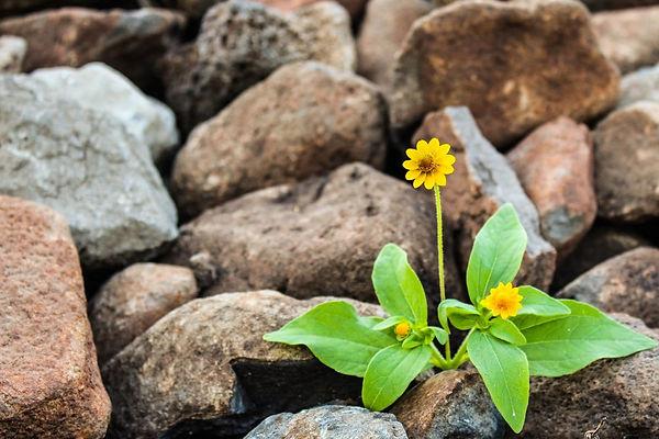 brown-flora-floral-1028930.jpg