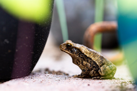 frog up close