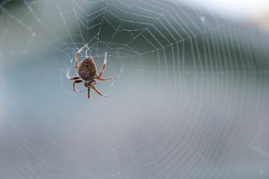Eudora the spider