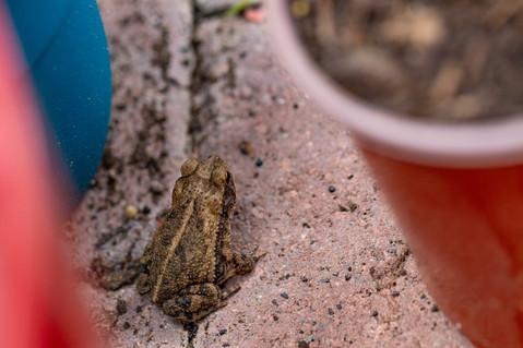 Hi, frog