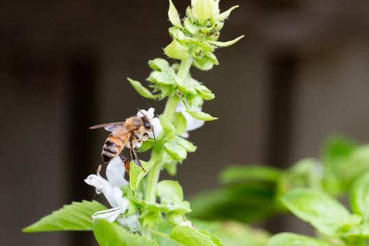 hey, bee!