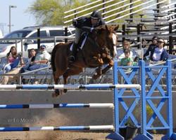 """Copper Twist """"Pumba"""" in Scottsdale"""
